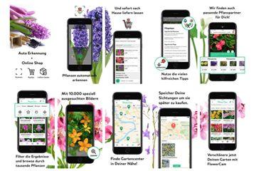 Pflanzen online kaufen - Einfach und bequem bei Olerum!