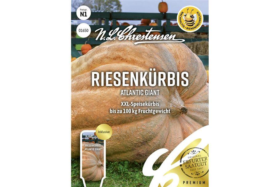 Cephalotus follicularis Hummer´s Giant online kaufen