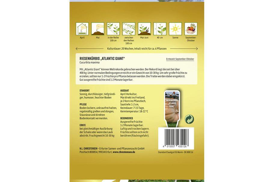 Bucephalandra catherina Giant online kaufen RENDO-SHRIMP